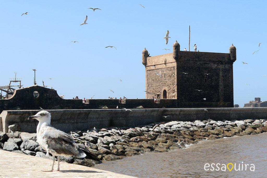 Photo skala port Essaouira Maroc