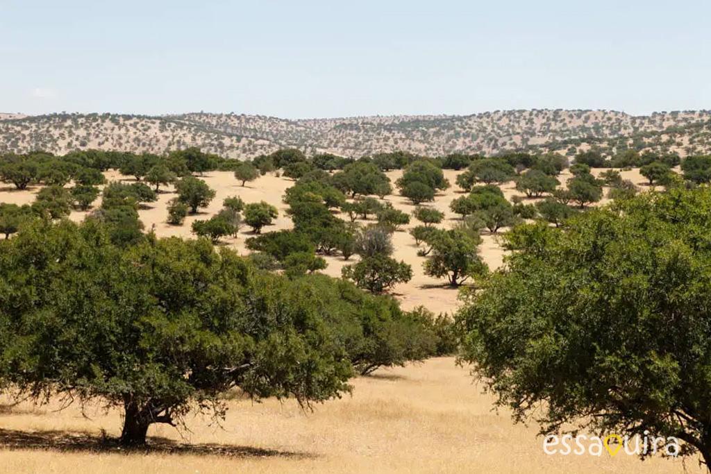 Route argan Essaouira maroc