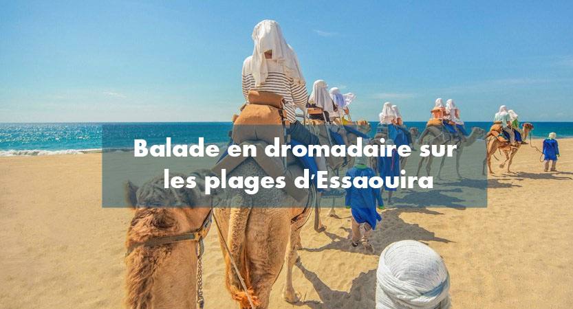 Balade chameau dromadaire plage Essaouira