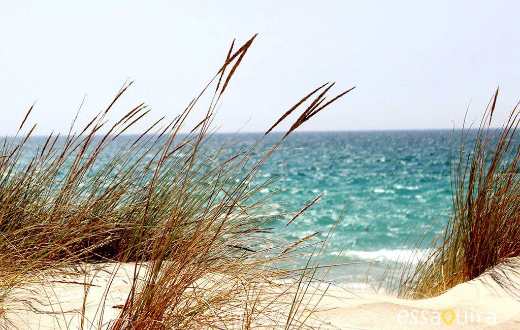Climat plage Essaouira